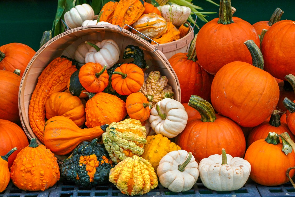 Gourds, squashes and pumpkins, oh my! As colorful as the costumes children wear for trick-or-treating may be, nature's beauty is unsurpassed this time of year, and the scores of pumpkins, gourds and squashes on display only add to that colorful melange.