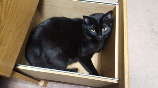 Office Kitty - Joel the Brave in the desk drawer. #OfficeKitty