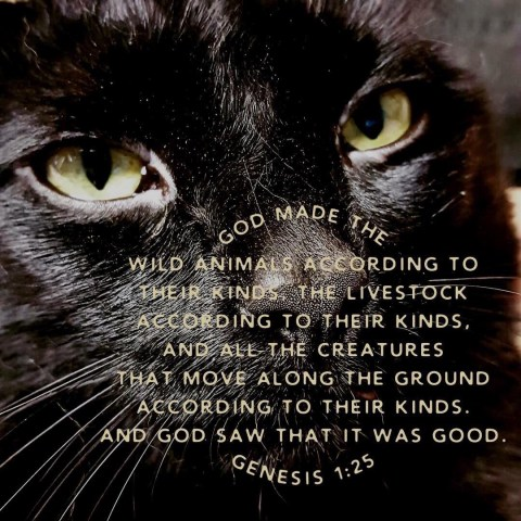 VOTD February 6 - God made the beasts of the earth after their kind, and the cattle after their kind, and everything that creeps on the ground after its kind; and God saw that it was good. Genesis 1:25 NASB