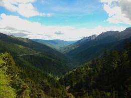 Forêt Yunnan