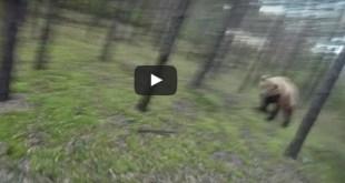 poursuite grizzli velo
