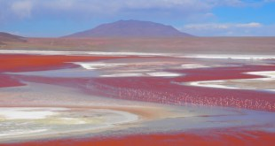 laguna colorada flamands roses sud lipez