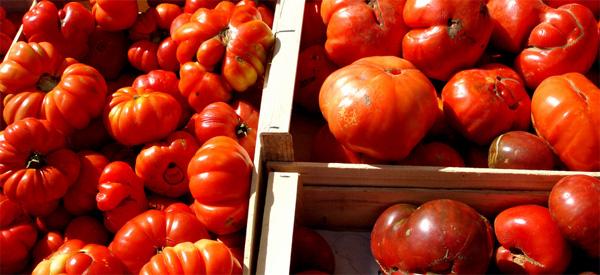 tomate-marmande