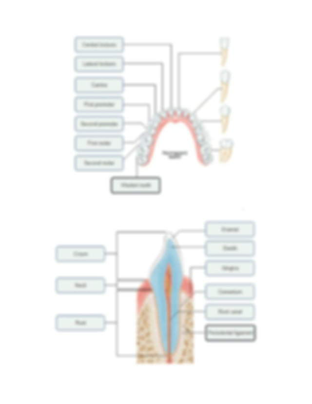 lab exercise 38 anatomy or the digestive system.docx - Lab ...