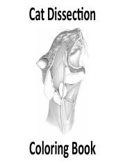 Cat Coloring Book 1 Cat Dissec On Coloring Book Supercial Muscles Of Le9 Hindlimb Posterior Lateral View 1 External Oblique 2 Sartorius 3 Fascia Course Hero