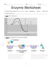 Enzyme Activity Worksheet 2