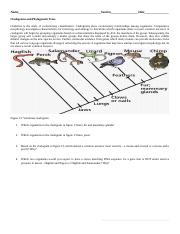 Museum And Cladograms Bio2 3