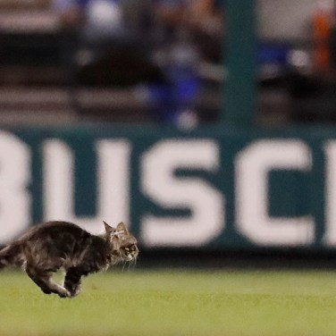 A cat runs across the field at Busch Stadium during the sixth inning of a baseball game between the St. Louis Cardinals and the Kansas City Royals on Aug. 9, 2017, in St. Louis. (AP Photo/Jeff Roberson)