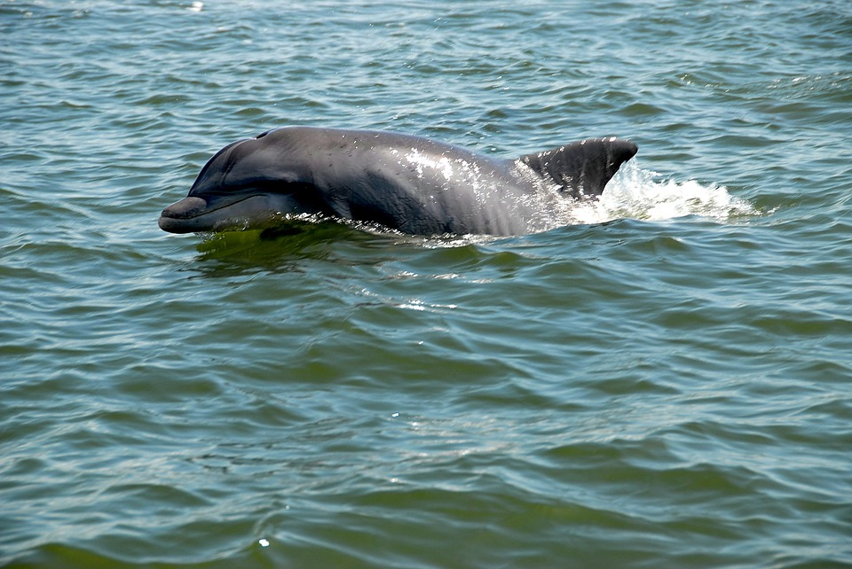 US Urges More Protection for Severely Endangered Dolphins