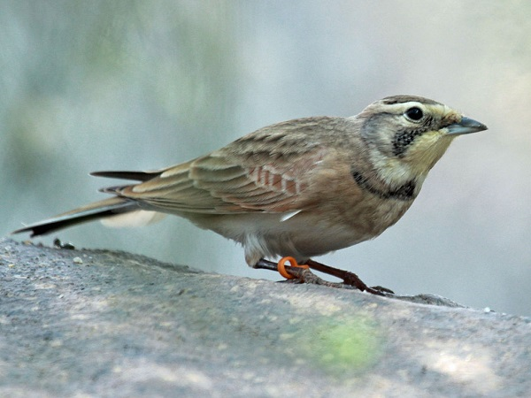 Birds helping to answer climate change mysteries