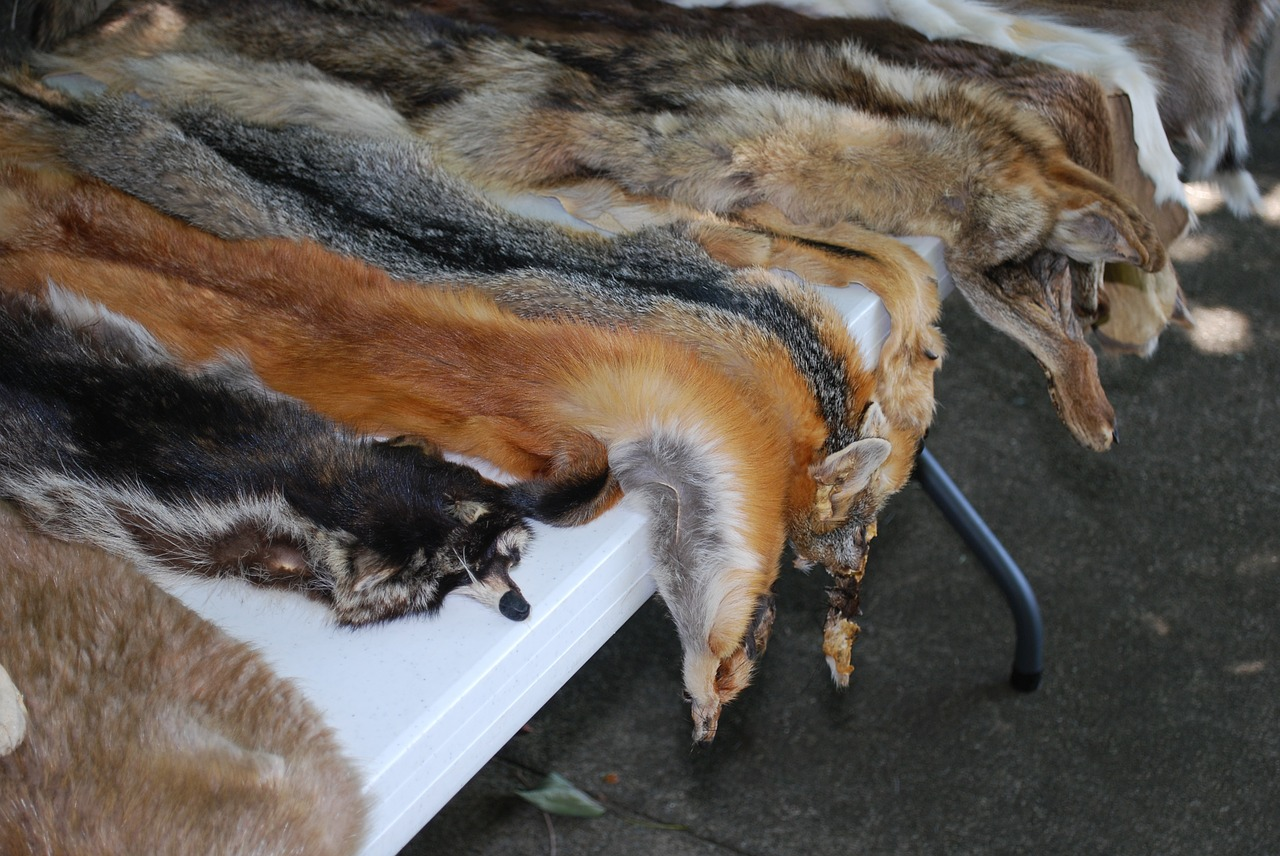 San Francisco Becomes First US Major City To Ban Sale Of Fur