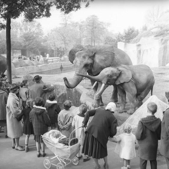Zoo de Vincennes in Paris around 1960 (Walt Girdner photo)