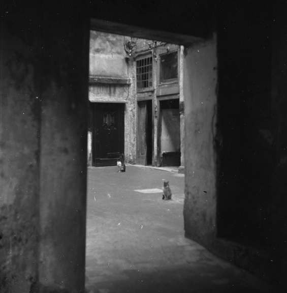 Alley cats. From Walt Girdner's Europe collection.