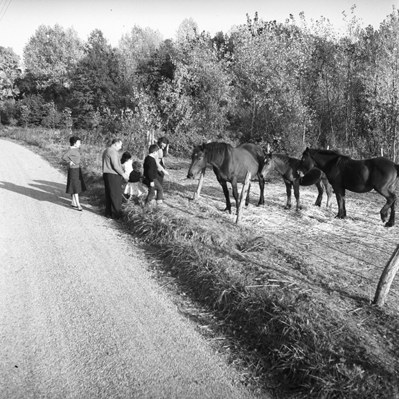 Approaching roadside horses. From Walt Girdner's America collection.
