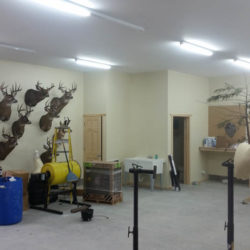 Mehlhop Four Season Taxidermy (137)