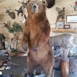 Mehlhop Four Season Taxidermy (162)
