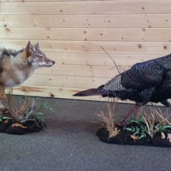 Mehlhop Four Season Taxidermy (204)