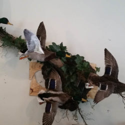 Mehlhop Four Season Taxidermy (30)
