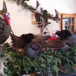 Mehlhop Four Season Taxidermy (32)