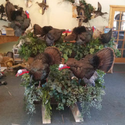 Mehlhop Four Season Taxidermy (40)