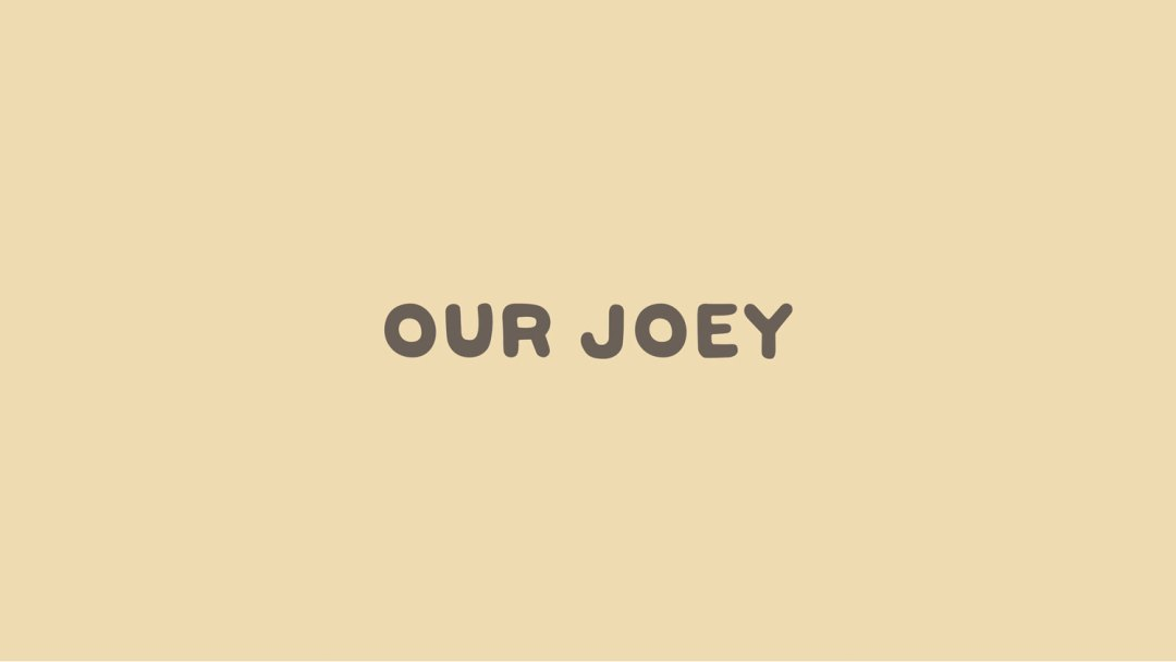 our-joey-fashion-brand-identity