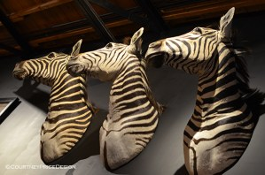 Timothy Oulton Zebra Heads