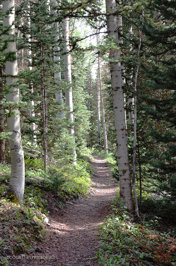 hiking trail, telluride trails