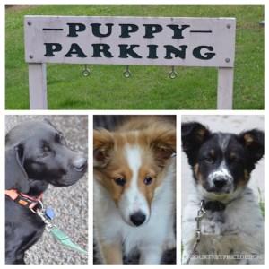 puppy parking, Telluride