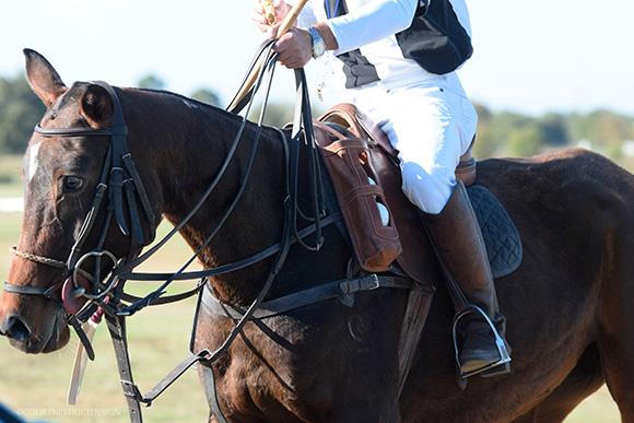 polo  ref on www.CourtneyPrice.com