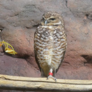 Memphis Zoo - Who gives a hoot?