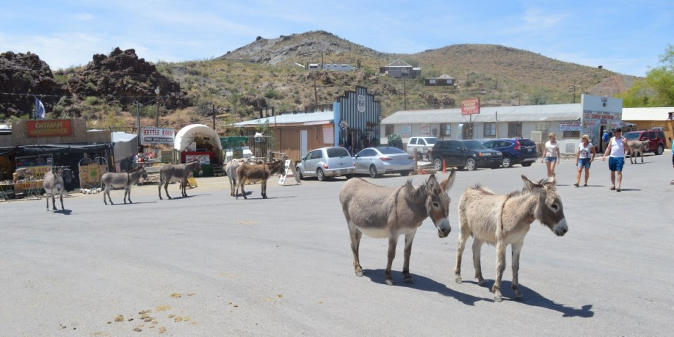Locals on Oatman Main Street