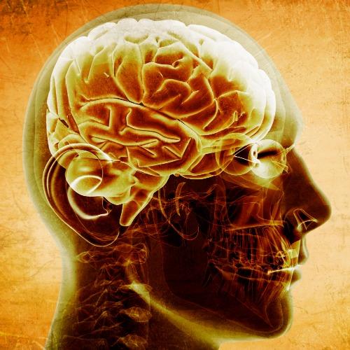 brain chemicals sex addiction in Derby