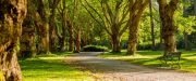 Miller Grove Park