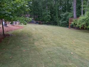 Zoysia Grass Atlanta