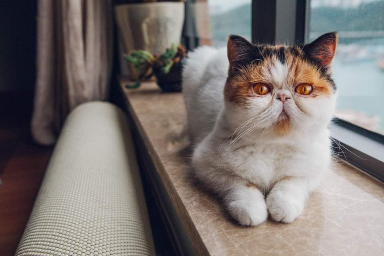 Katze liegt auf der Fensterbank.