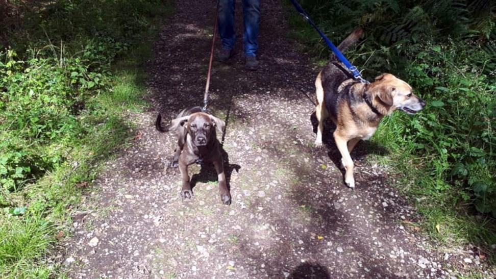 Charly und Chico auf der Rotbachseerunde Header
