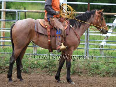 Recognizing Horse Colors  With Pictures Horse colors  Bay roan