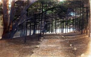 Pine Iland Pond 3 watermark