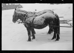 Scene at snow carnival, Lancaster, New Hampshire, photograph by Arthur Rothstein, February 1936; Library of Congress Prints and Photographs Division.