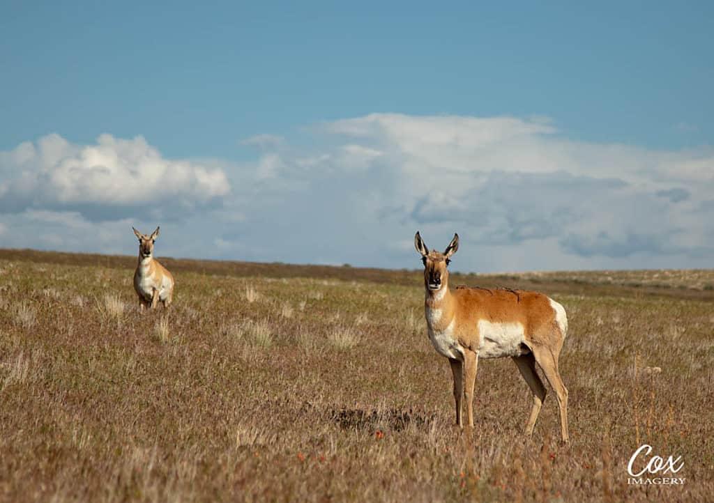 Antelope Utah