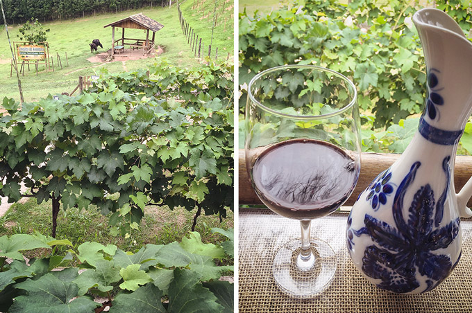 O vinho da Quinta do Olivardo, em São Roque | Cozinha do João