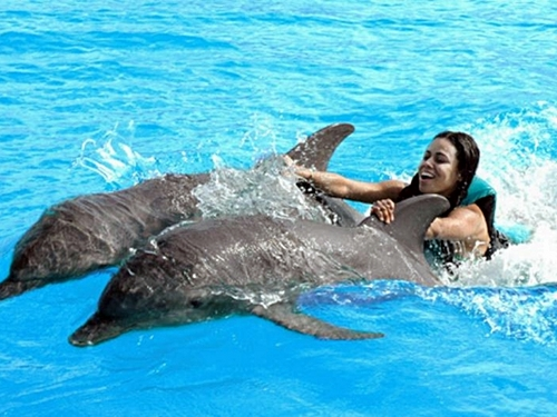 Cozumel Swim with Dolphin Adventure Excursion
