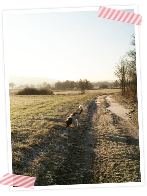 Über den blauen Himmel gefreut und darüber dass der Hund glücklich ist.