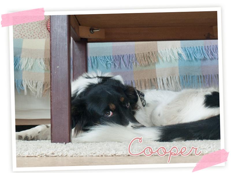 Super-Cooper, der verrückte kleine Kerl und einer der neurotischsten Hunde die ich jeh gesehen habe!