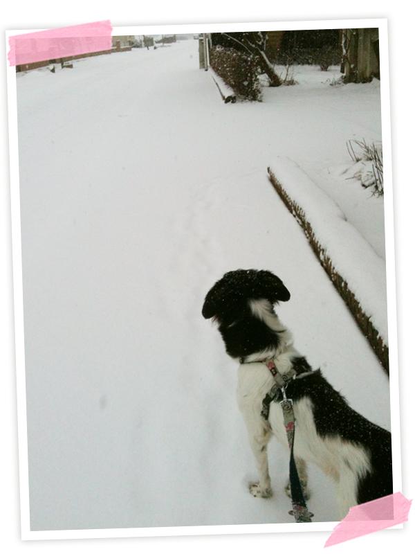 Meine morgendliche Hunderunde... Ich glaube, Cooper weiß gar nicht mehr, wie eine grüne Wiese aussieht!