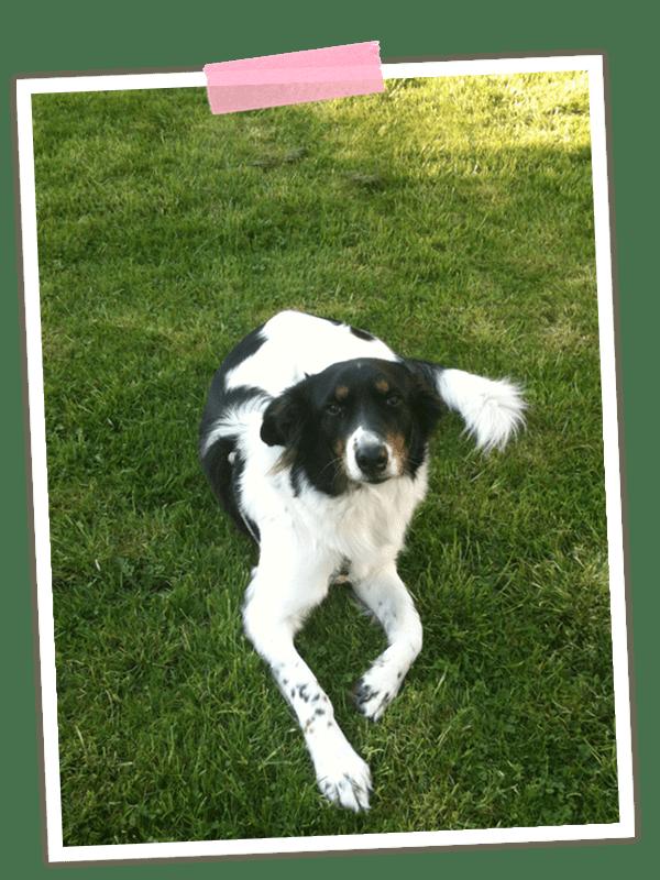 Mit dem Lieblingshund. Wenn Frauchen krank ist und Herrchen Schichtdienst hat, geht der Hund nicht so oft spazieren, wie er gern möchte ;-) Zum Glück haben wir einen großen Garten! Und heute wird noch eine große Runde gemacht!