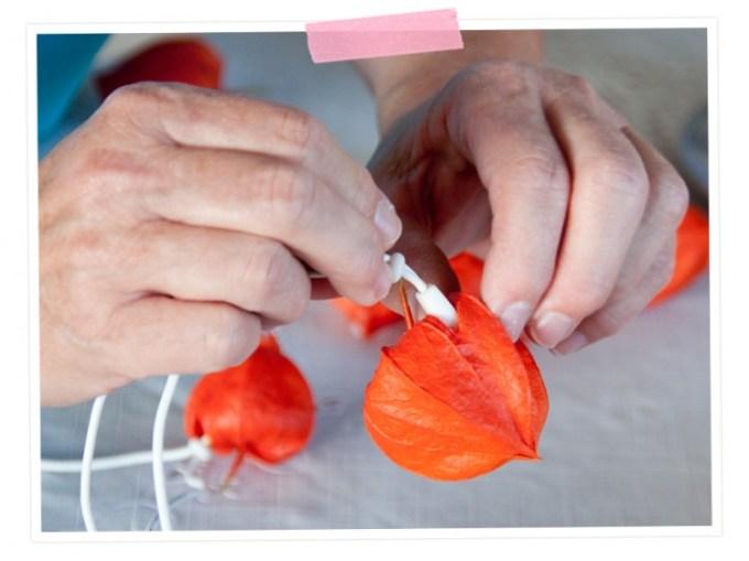 DIY: Herbstlicht - Lichterkette aus Lampionblumen: Dann ganz vorsichtig die Birne der Lichterkette in die Blüte stecken. cozy & duddly
