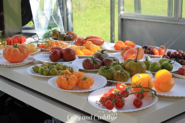 Mit Ikea bei den Tomatenrettern - Blogevent