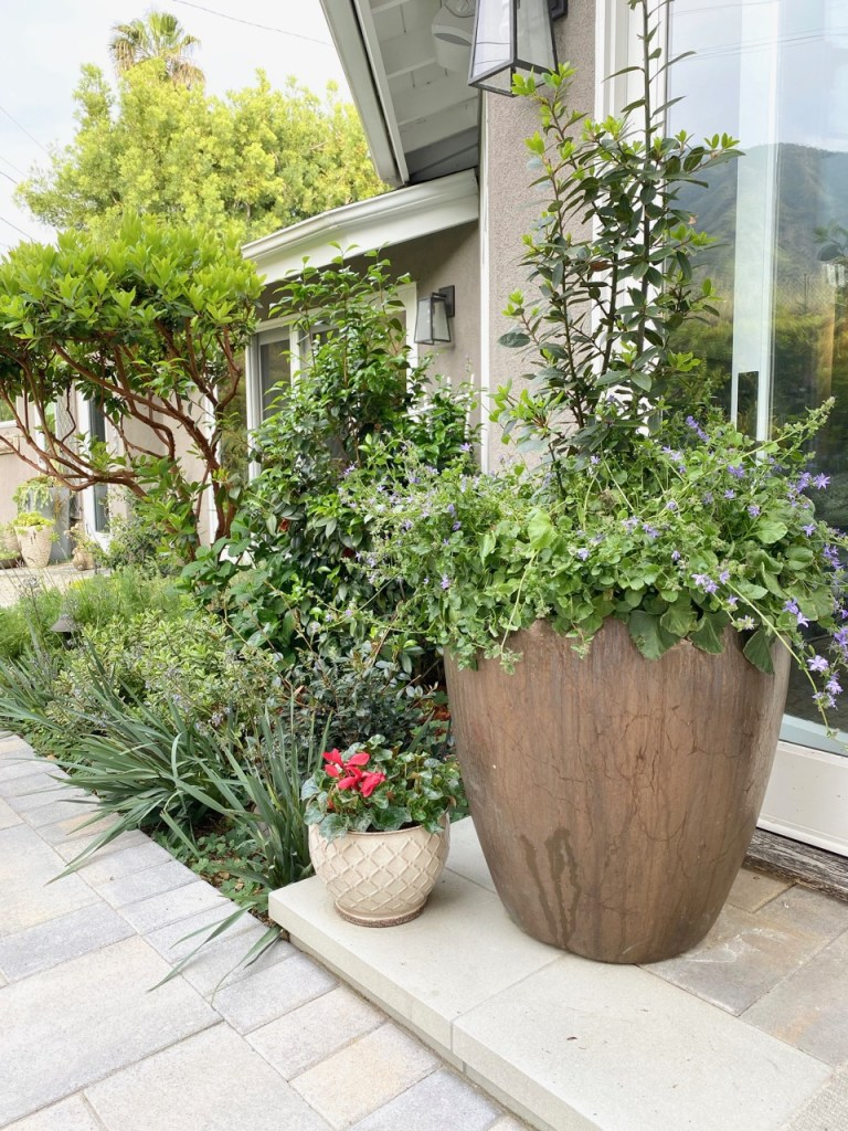 Potted plants in the garden - outdoor living