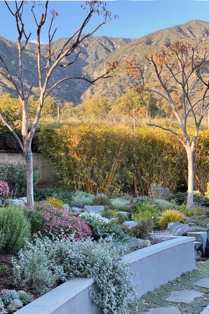 Southern California backyard set against the San Gabriel Mountains